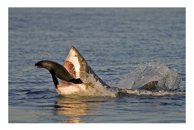 Shark news stories