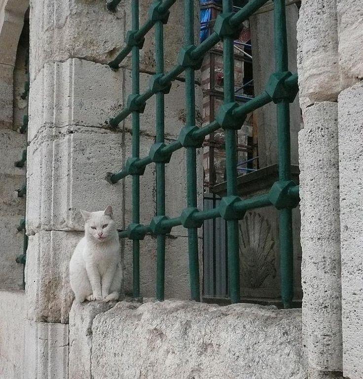 innocent and beautiful - Fatih, Istanbul