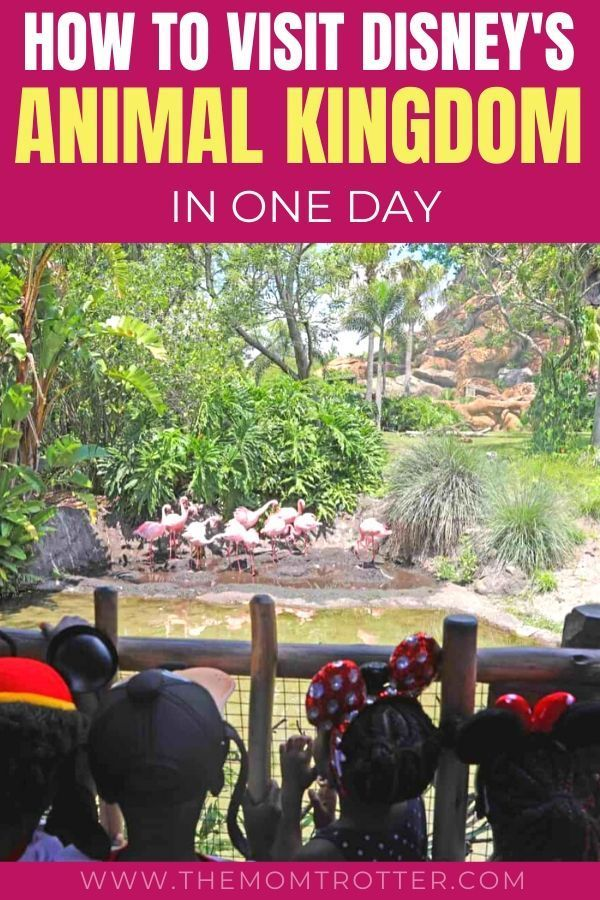How To Visit Disney S Animal Kingdom In One Day In 2020 With