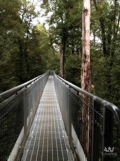 The Otway Fly Tree Top Walk in Victoria