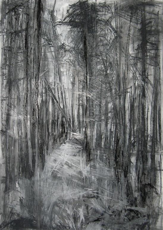 Saatchi online artist janine baldwin charcoal drawing silpho