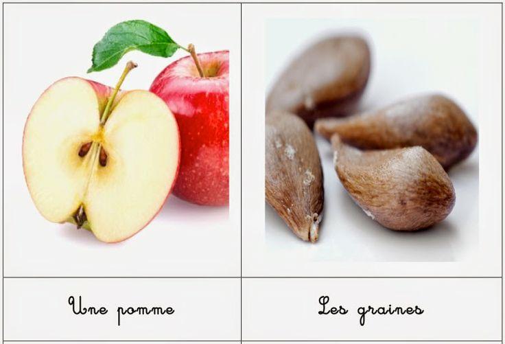 Education Joyeuse*: Le cycle de la pomme en cartes
