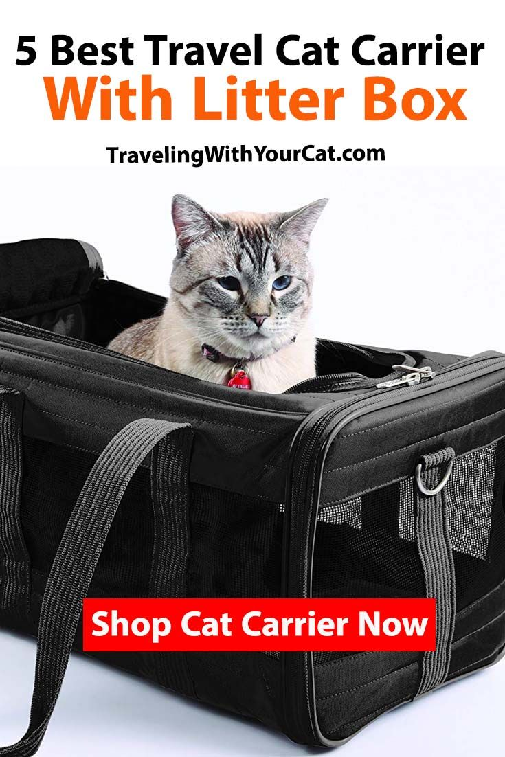 5 Best Travel Cat Carrier With Litter Box In 2020 With Images