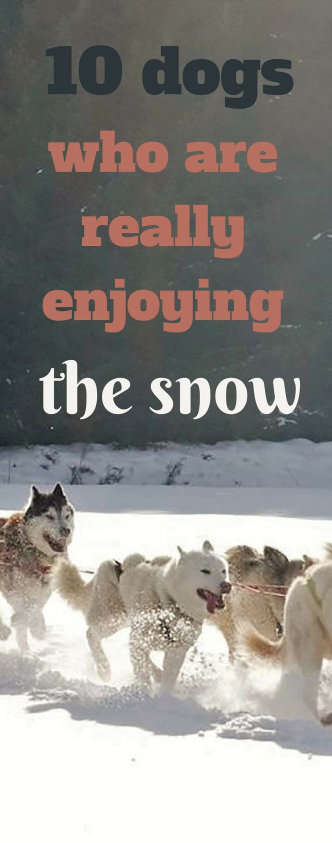 10 dogs who are really enjoying the snow 2018