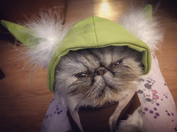 Persian Yoda