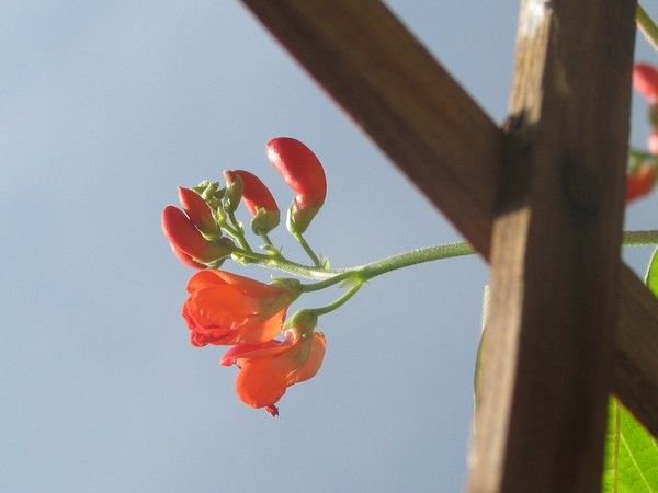 red florals by Heli Aarniranta on ARTwanted