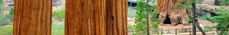 Giant Sequoia Trees via the National Parks Sequoia & Kings Canyon Visitor Site