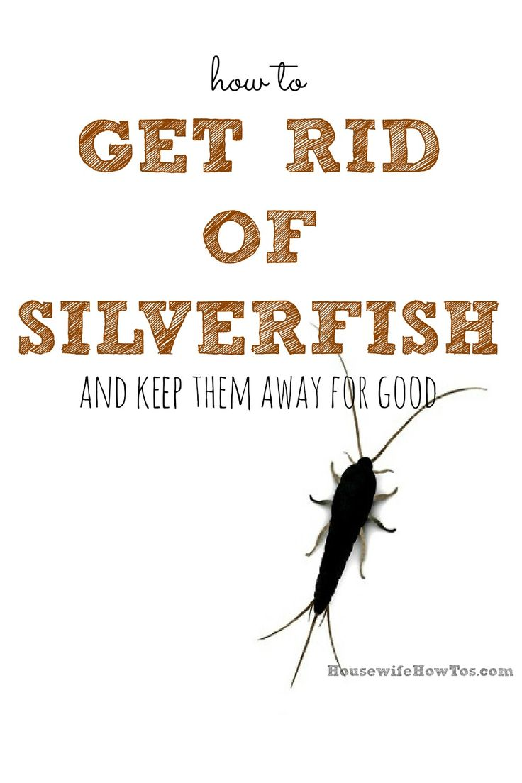 Getting rid of silverfish by hand can be tricky since they for How to get rid of silver fish