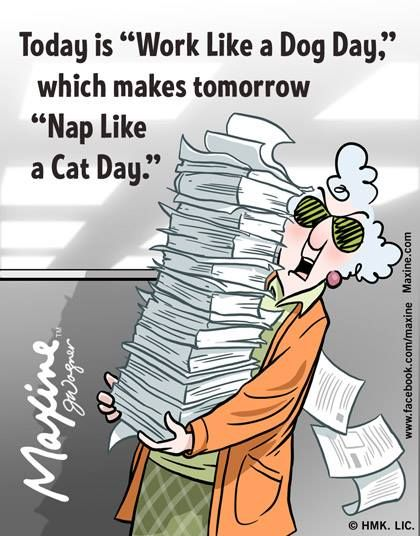 Work like a Dog Day followed by Nap like a Cat Day! Good plan I think!