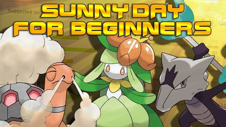 Sunny Day Guide for Beginners!