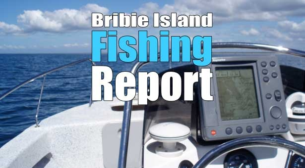 For all the latest on Fishing at Bribie Island, check out our weekly Fishing Report. See ya on the water!