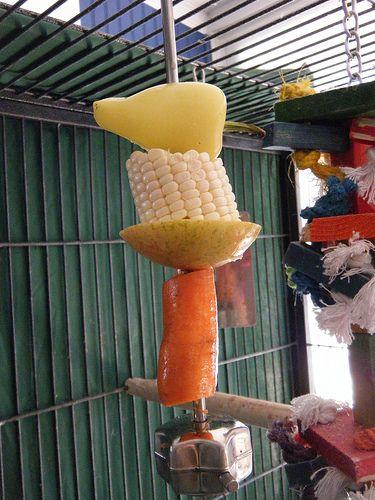 Морковь волнистым попугаям