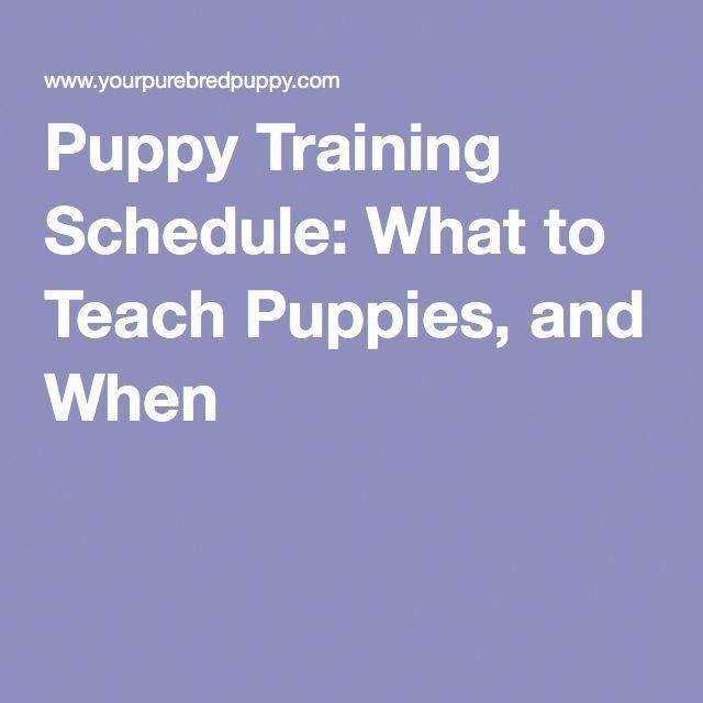 Puppy Training Schedule: What to Teach Puppies, and When
