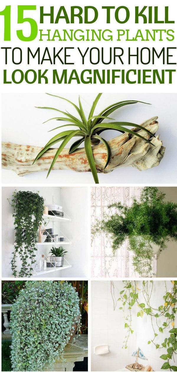 15 Hard to Kill Hanging Plants That'll make your Home Look Magnificent #homedecor