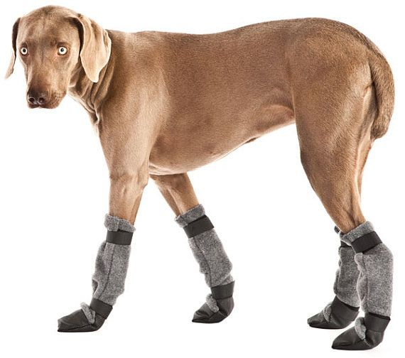 I bet these would help senior dogs who slip on floors  WEIMARANER Dog Booties by VoyagersK9Apparel on Etsy, $39.00
