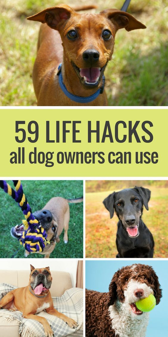 From using packing tape to pick up dog hair to stuffing a Kong, here's 59 awesome life hacks all dog owners should know.