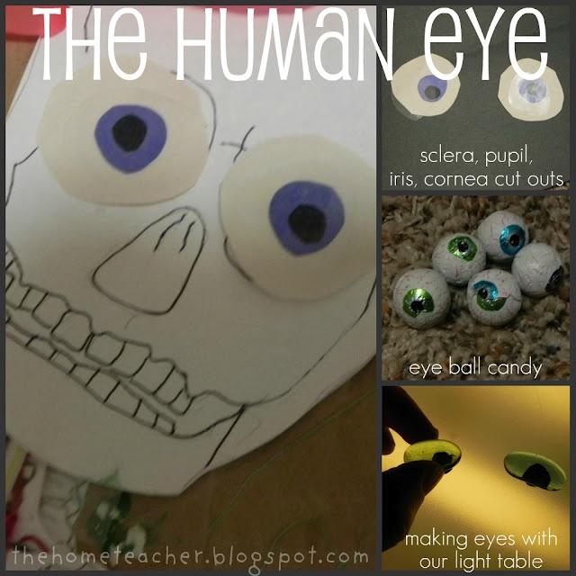 The Eyes (Human Anatomy): Diagram, Optic Nerve, Iris ...