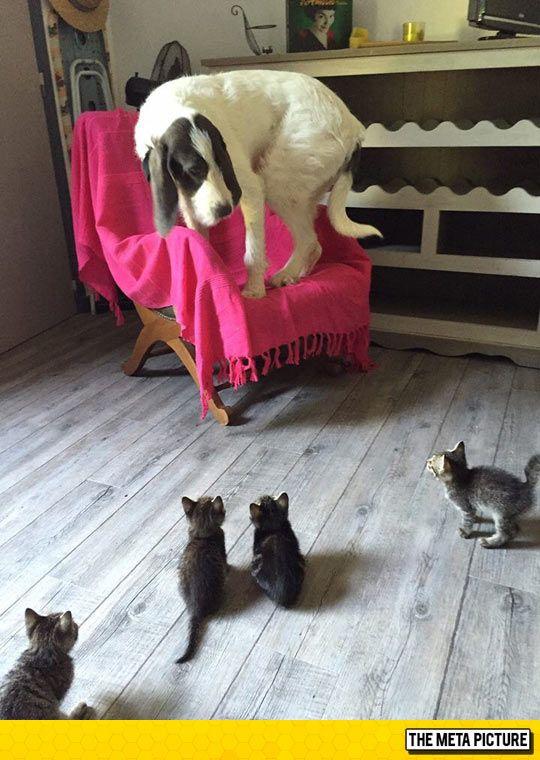 Little Kittens peut être très effrayant