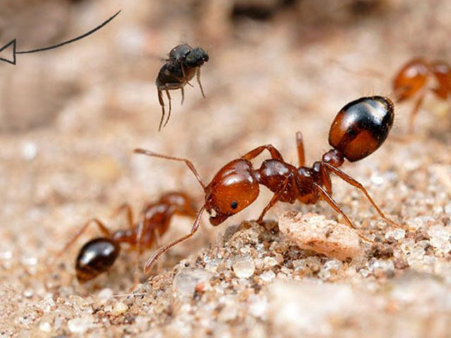 Ants Pest Control Fire Ants Ants Insect Photography