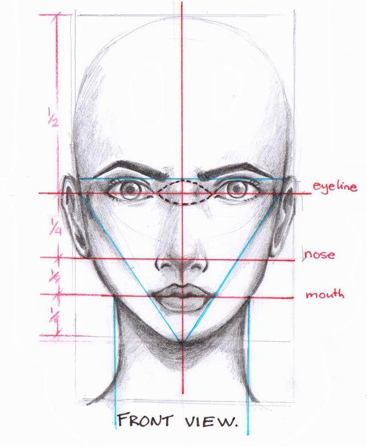facial proportion drawing