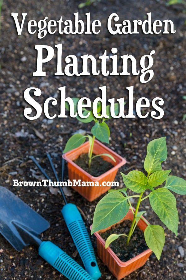 Vegetable Garden Planting Schedules Garden Plants Vegetable