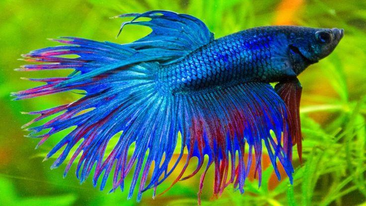 fish tropical poisson - photo #27