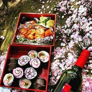 【hirokazu_sawa】さんのInstagramをピンしています。 《with lunch box of hanami. cherry blossom was bloomed in  temple of Osaka .  backpacker travelling in Ajia! but cyclist is coming back . . (travelling in Ajia in 2010) .  花見といえば、お花見弁当! 大阪、道明寺の桜のトンネル。  台湾自転車メーカーのジャイアントにて道具をそろえてチャリダー復活! . . (2010年アジア旅バックパッカー編/instagramに過去旅画像アップ)  #sakura#Osaka #cherryblossom#bloom #giant#temple #taiwan  #backpacker(#travelling #Ajia#2010 ) #日本 #道明寺#ジャイアント#満開 #大阪 #お花見弁当#桜 (#2010年#アジア#バックパッカー#instagram#画像アップ )  #世界一周 #自転車…