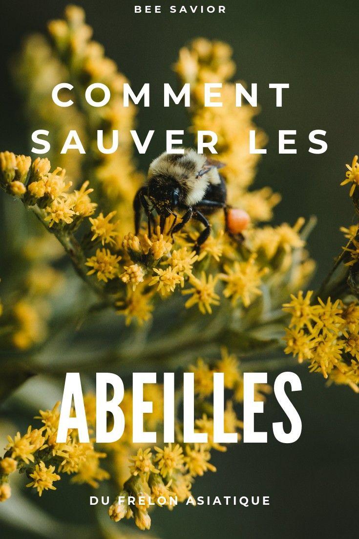 L Abeille Est Un Insecte Pollinisateur Indispensable A La Vie Sur