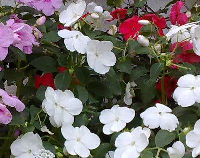Guia de jardin: Alegría de la casa