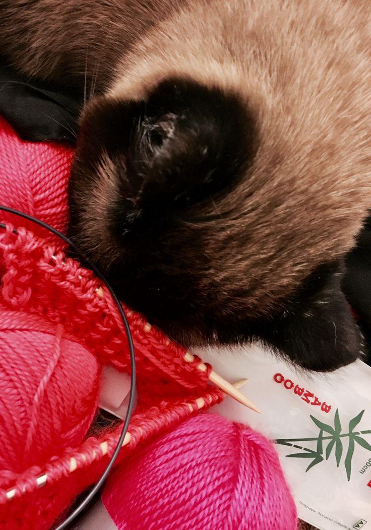 私は冬のために新しいスカーフを編んでいます。私のアシスタントは疲れているようです。:D New scarf in the making. My assistant seems a bit tired. :D