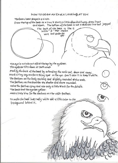How to Draw Worksheets for The Young Artist: How to Draw an Eagle Face Lesson and Worksheet