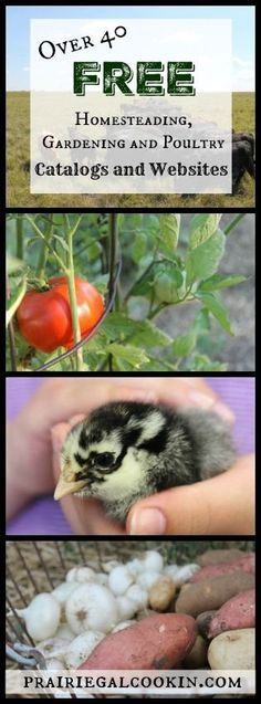 Over 40 FREE Homesteading, Gardening and Poultry Catalogs and Websites!  #free #homesteading