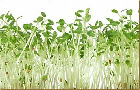 imagenes de beneficios nutricionales de la alfalfa - Buscar con Google