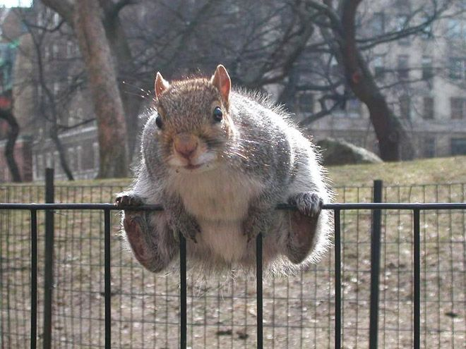 Fat Squirrels that Totally Overate Last Winter