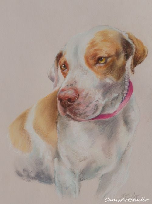 Dog portrait on request. Pastel drawing by Canis Art Studio