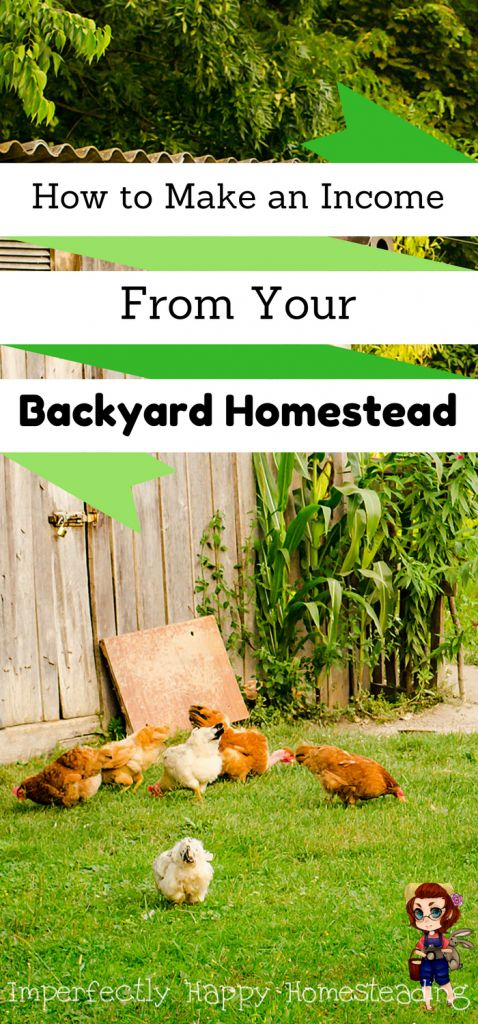 How to Make an Income From Your Backyard Homestead - Ideas to Get You Started Making Money from Homesteading
