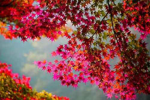 unbelievable colors of autumn...