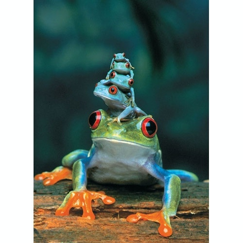 Red Eyed Tree Frog Puzzle 1000 pcs - Grand River Toys - Canada's #1 Online Toy Store: Frogs Families, Critter, Trees Frogs, Art Prints, Totems Pole, Families Trees, Families Portraits, Red Eye, Animal