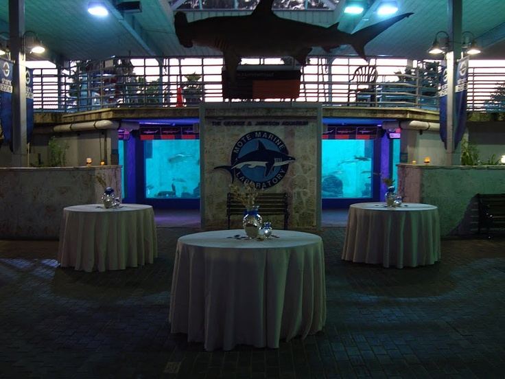 Mote Aquarium Is Perfect For An Evening Reception And