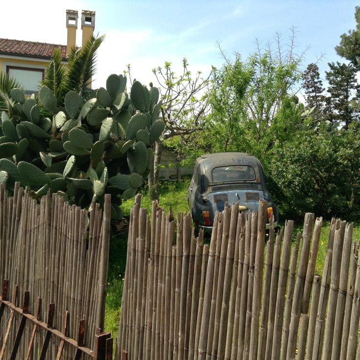 Old Fiat 500, Opuntia ficus-indica & Reed fence in Barraccamanna, Caglari, Sardinia.