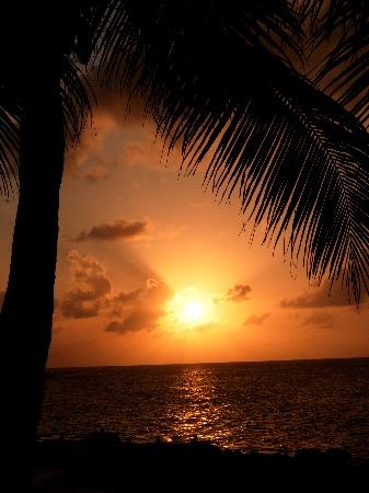 Sunset House Sunset: Beautiful Sunset, Palm Trees, Beach Sunset, Sunrise Sunset, Sunsets Board, Photo, House Sunset, Tropical Sunset