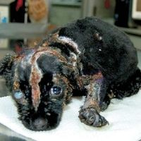 Puppy Mills: Stop keeping pet stores in business that still sell puppies---- PLEASE SIGN!!!!
