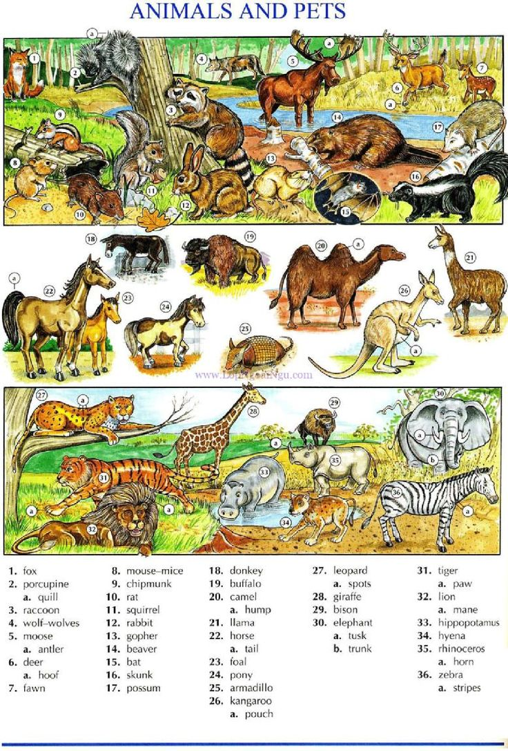 112 - ANIMALS AND PETS A - Picture Dictionary - English Study, explanations, free exercises, speaking, listening, grammar lessons, reading, writing, vocabulary, dictionary and teaching materials