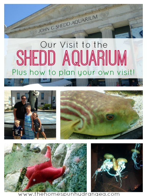 Disclosure Shedd Aquarium Treated Our Family To Day