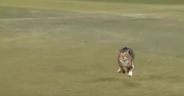 He wants to be on the team! 😸  #catlovessports #baseballandcats #catsareawesome #playfulcats #cats  #gottalovecats #catsmakemehappy #catsandlove #cutecats