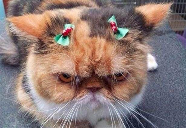19 katter som absolut INTE älskar julen lika mycket som du gör