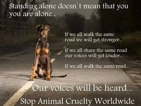 No Kill Coalition's Photo Be Their Voice Pinterest Animals New Animal Abuse Quotes