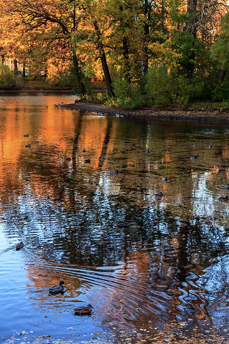 George Westermak Photograph - The Bright Colors Of Autumn, Quiet Evenings Are Reflected In The Waters Of The City Pond by George Westermak#GeorgeWestermakFineArtPhotography #ArtForHome #FineArtPrints #travel #landscape #nature