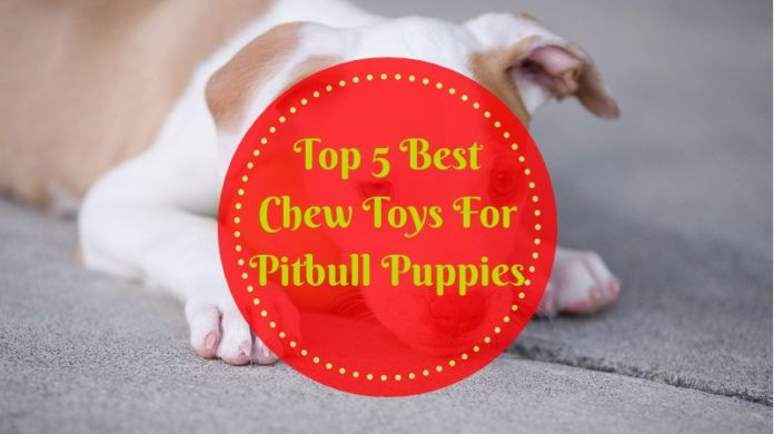 Best Chew Toys For Pitbull Puppies Top 5 Picks In 2020