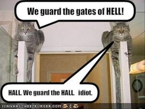 funny cat pictures with captions - Google Search